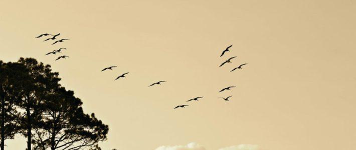 Vogel overlast?
