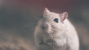 Diervriendelijk muizen bestrijden