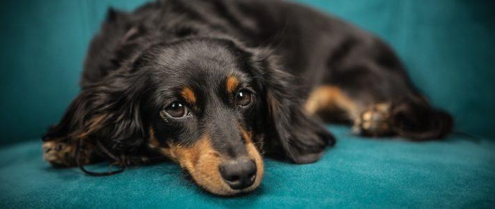 Online puppytraining: je hond beter leren kennen