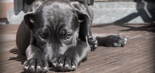 Waarom een kantoor hond een goed idee is