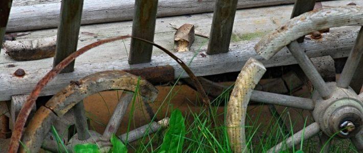 Houtwormen, meer schade dan je had verwacht